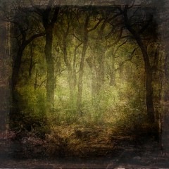Texture/Background 13 (~Brenda-Starr~) Tags: trees texture forest photoshop dark woods background stock creativecommons resource textured cclicense premade brendastarr freeforuse thestockyard