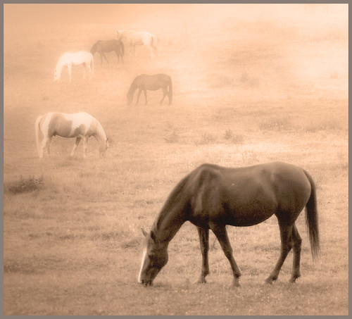 Six Horses in Morning Fog