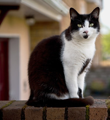 House Cat (C) Aug 2007