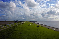 De Dijken van Friesland (buteijn) Tags: sky holland waddenzee nederland wolken zee friesland harlingen schapen frysln dijken buteijn aplusphoto