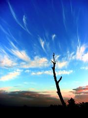 Always Reaching, shot by flickr member ecstaticist