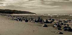 The Rocky Shore (_setev) Tags: sea newzealand beach mono coast sand rocks stephen shore utata otago dunedin seashore murphy downunder setev downunderphotos stephenmurphy httpdownunderphotosblogspotcom