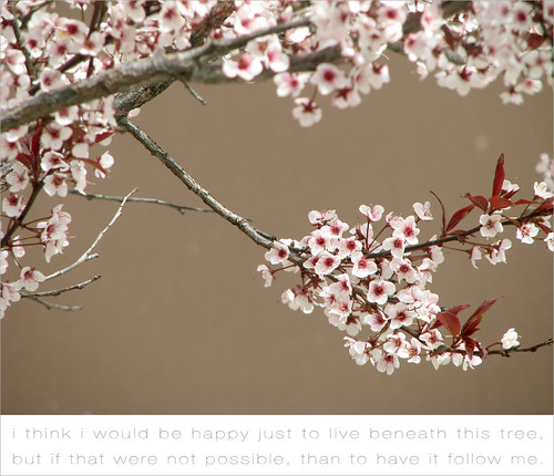 blossoming tree with poem