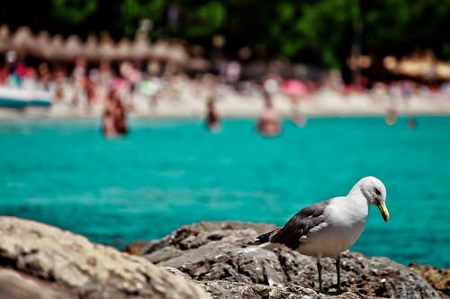 Palma di Maiorca: hotel e resort