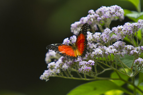Toronto Zoo - Butterfly and Flowers