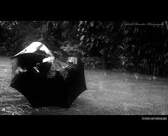 Its a rainy day.. (VinothChandar) Tags: city blackandwhite storm cold water rain umbrella canon season photography photo drops cool wind madras windy stormy rainy photograph dew monsoon enjoy tuesday raindrops storms raining chennai tamil climate tamilnadu rains southindia thunderstorms rainyseason windstorm smellofsand