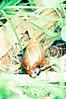 caramujos...africanos (karina pazzini) Tags: family cactus cats verde familia gato aconchego amoras happyday aromas caramujos