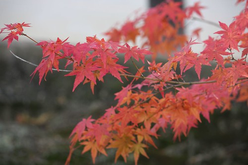 Autumn Leaves,紅葉