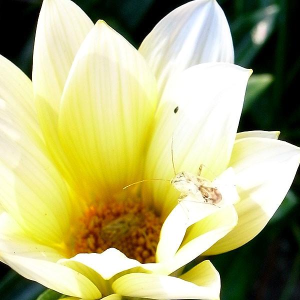 花に止まる小さな虫