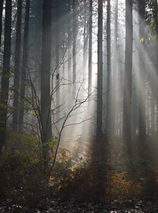 Shafts of light (yvonnepay615) Tags: uk autumn trees nature woodland lumix woods norfolk panasonic sandringham g1 rays 45mm eastanglia mywinners flickraward bestofmywinners flickraward5 flickrawardgallery blinkagainsteppingup blinksuperstars