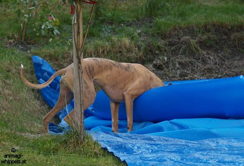 Coco testet das Poolwassser