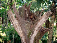 2007 0406 Wahlin Trail SP - 13.jpg (rustyalaska) Tags: florida floridastatepark palmcoast wahlinhikingtrail