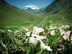 Centinela de piedra (Lolo · 100x100) Tags: argentina flor paisaje guillermo mendoza montaña lolo agustin aconcagua pizarro 100x100 guillermoagustínpizarro guillermopizarro guillermoagustinpizarro mostremosnuestraargentina lolo100x100