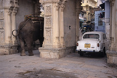 An elephant and an Ambassador... (a n j a) Tags: india elephant car gate waiting ambassador rajasthan udaipur rearend olifant