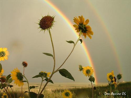 Rainbow in the Prairie