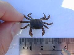 DSCN0031.JPG (Daniela Zaror) Tags: bichos marinos