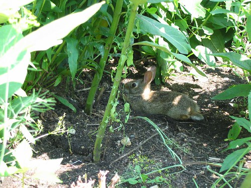 Bunny in the Butterfly Garden