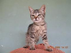 Nene (Mauricio Portelinha) Tags: animal cat gato gata felino bicho ivaipor