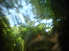 Abstractions naturelles n°DSC08999 (au fin fond de l'écran) Tags: wallpaper nature garden photo perception lumière background jardin plan vert trouble vision abstraction essence monde ballade fond écrans bois verdure verre décran loupe abstrait arrière lentille prisme écologie wikka naturel autre végétaux végétale lomographie floues sphère différent chamanique expérimentales découverté