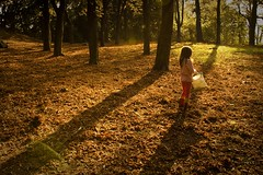 The Girl in the Enchanted Light (Gilderic Photography) Tags: wood autumn light shadow red tree fall nature girl leaves backlight forest automne canon rouge eos soleil kid europe raw child belgium belgique belgie magic chartreuse ombre lumiere enfant liege fille foret arbre enchanted contrejour bois alix feuille lightroom 500d gilderic oblats grivegnee