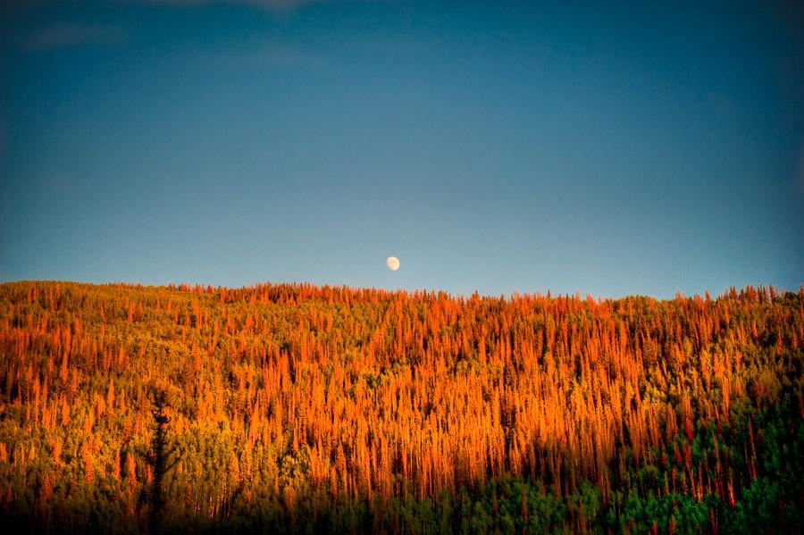moon & pines