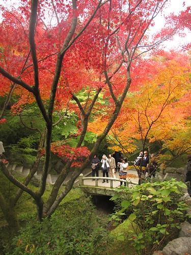 Tofukuji Fall