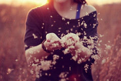 (schramcrackers) Tags: light sunset sun nature girl golden hands wind blow fluff hour