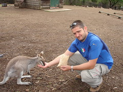 Roo feeding at Lone Pine2
