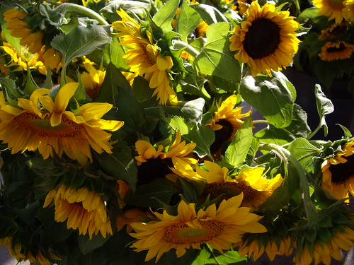 sunflowers061607