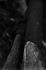 (kylewein) Tags: road wood old blackandwhite white fish black colour tree art texture net church nature water metal wall vancouver barn fence river kyle word mexico island sticks interesting place humanity think ad smoking line growth human valley shade rush porch attractive daisy letter form christianity flour opium loreto wein comox paddles