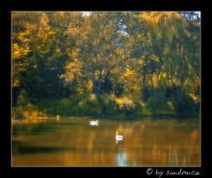 when the summer ends (claudia hering (sundance)) Tags: autumn sunlight swan pond orton themoulinrouge photoshopedit blueribbonwinner mywinners pentaxk110d aplusphoto superbmasterpiece diamondclassphotographer thegoldenmermaid