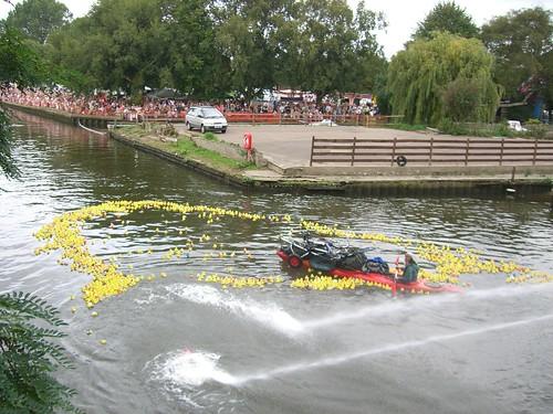 The field of racing ducks