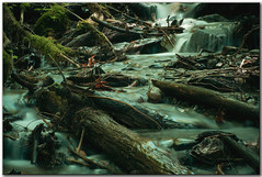 Forest Stream - Magic (janusz l) Tags: longexposure canada forest geotagged interestingness stream exposure britishcolumbia explore westcoast soe fraserriver middleearth bestofflickr chilliwack kanada bridalfalls janusz leszczynski supershot fraserrivervalley shieldofexcellence westcoastforest ysplix excellentphotographerawards theperfectphotographer friendlychallenges geo:lat=49190455 geo:lon=121730747