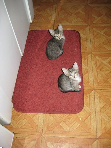 lil kitties on a mat