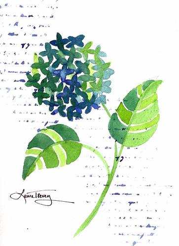Green Hydrangea