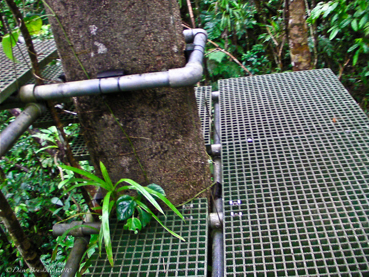 platform from zip fiji canopy tour