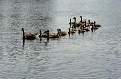 Family Outing (James Knox) Tags: ottawa ottawariver andrewhaydonpark