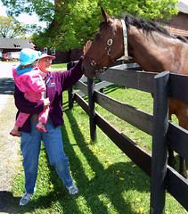 Petting a horse with Grandma