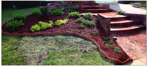Landscape - Mulch and Shrubs