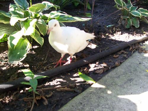 2007-08-21 Lost bird 004