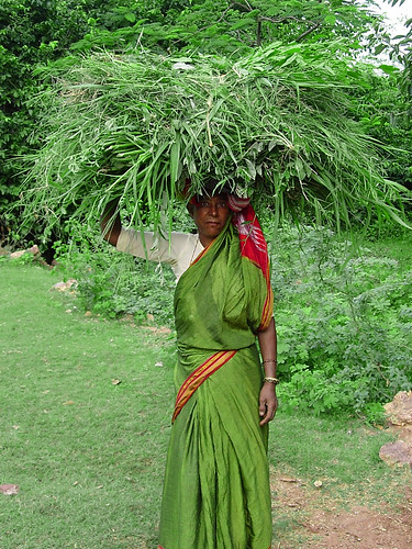 Porteuse de plantes