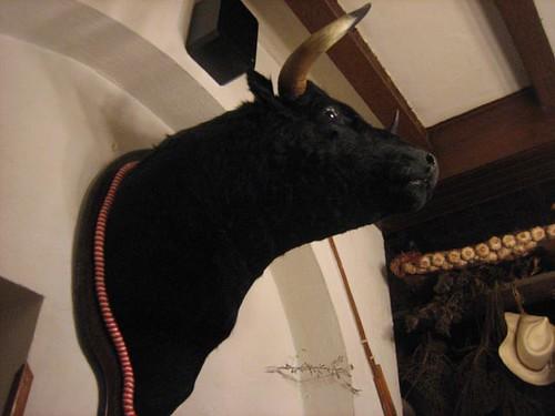Una cabeza de toro no podía faltar en un post sobre Erasmus-cuernos