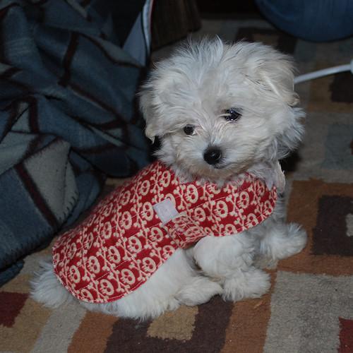 11.19.10 Benny in coat
