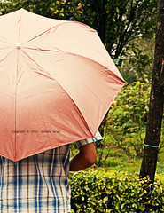 87 (nawar1424) Tags: man rain umbrella raindrops