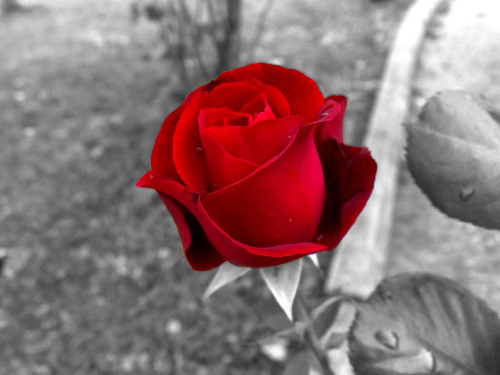 Sfondo rosa rossa tumblr