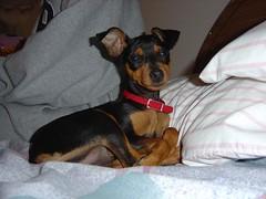 """Hennessey"" (mr_popoy21) Tags: mydog"
