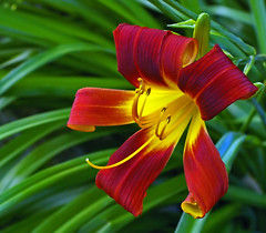 Day Lily B - by Property#1