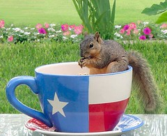 My cup of tea (Terry_Lea) Tags: backyard birdfeeder notphotoshopped newsquirrelnamedliberty