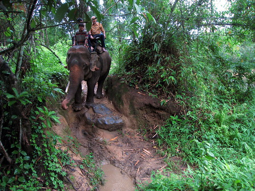 A steep, muddy incline
