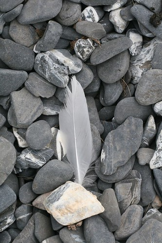feather and rocks